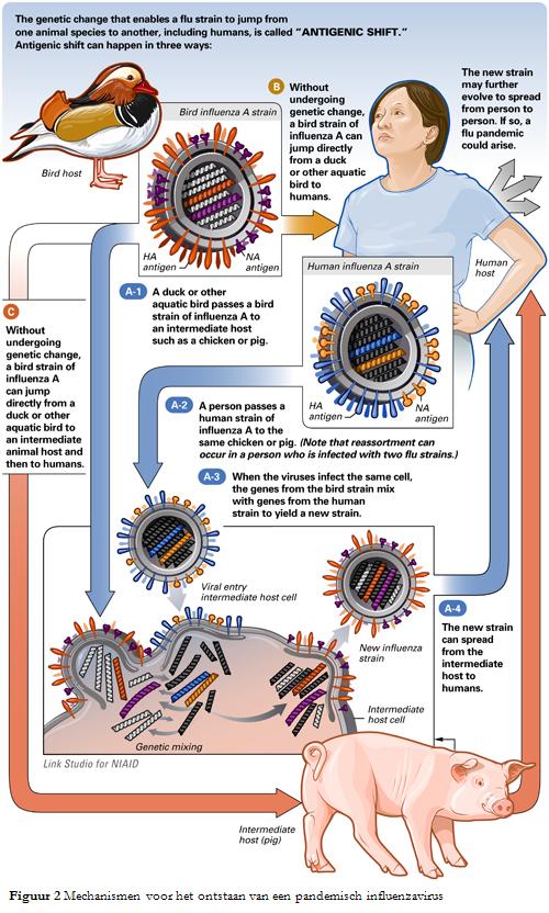 AntigenicShift